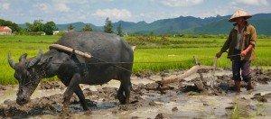 Paysant du Vietnam