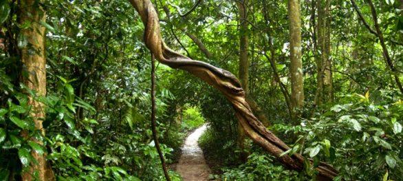 Le parc national de Cuc Phuong