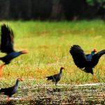 meilleures activités à faire dans le delta du Mékong